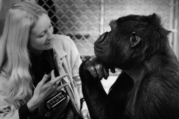 image du film Koko le gorille qui parle