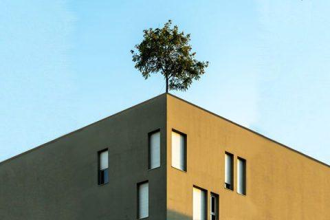 image d'un immeuble avec un arbre sur le toit