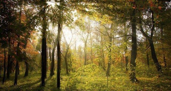 Photo d'une forêt