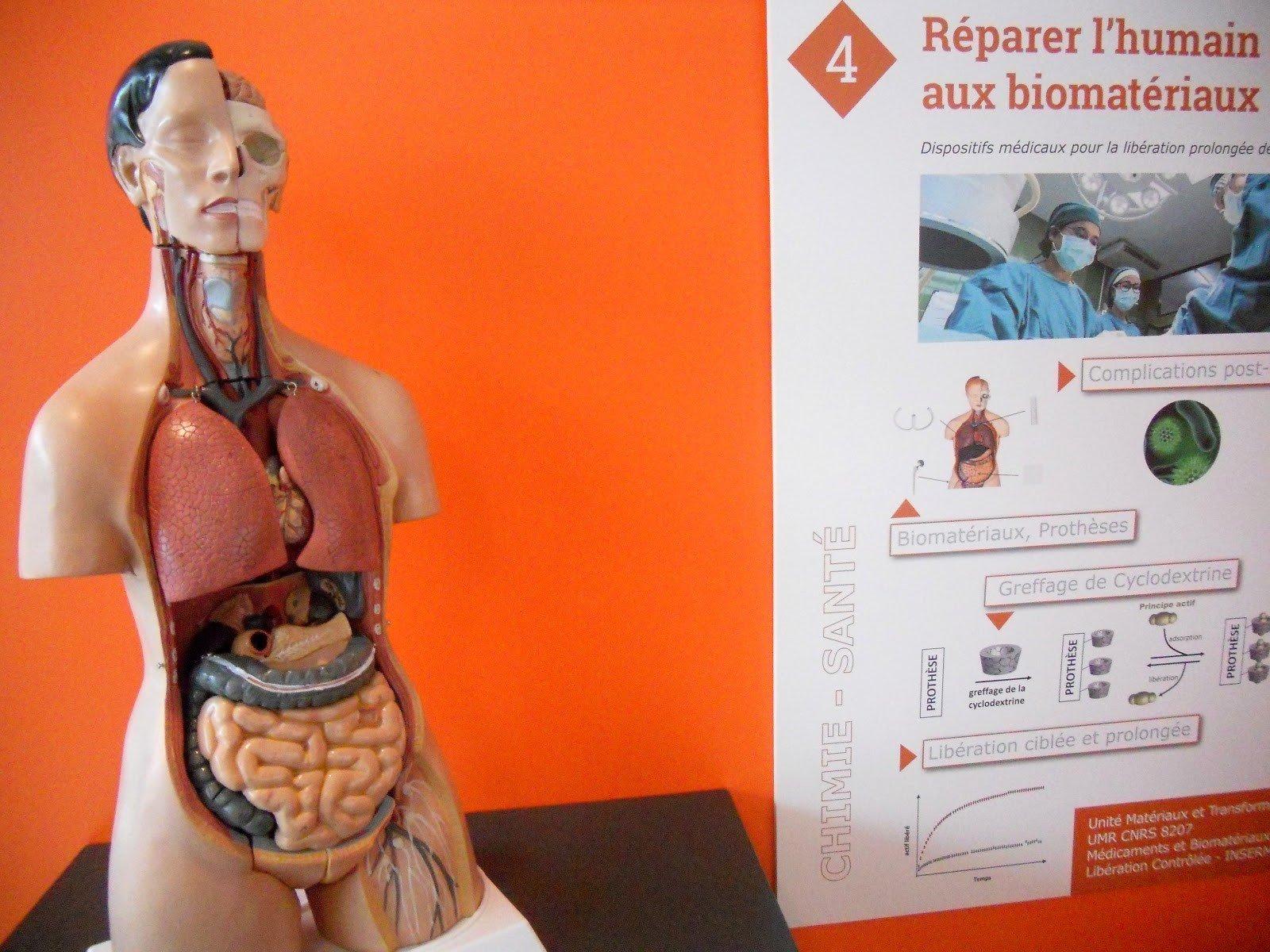 photographie d'un écorché et panneau d'information sur les dispositifs médicaux pour réparer l'humain
