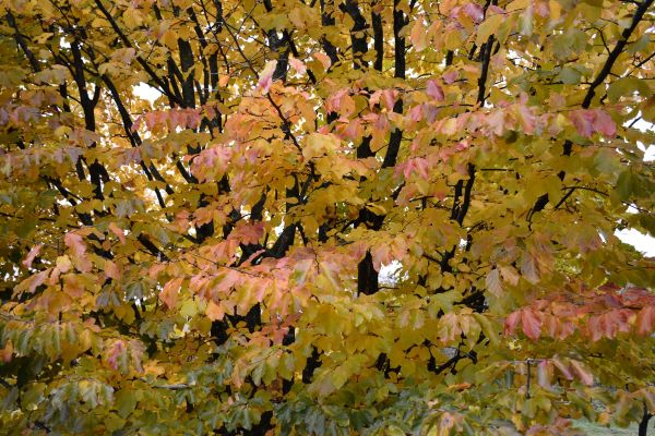photographie d'un arbre en automne