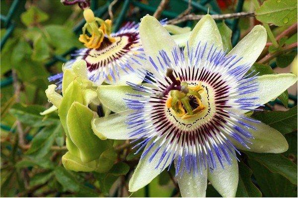 Photographie d'une fleur éclose et printanière