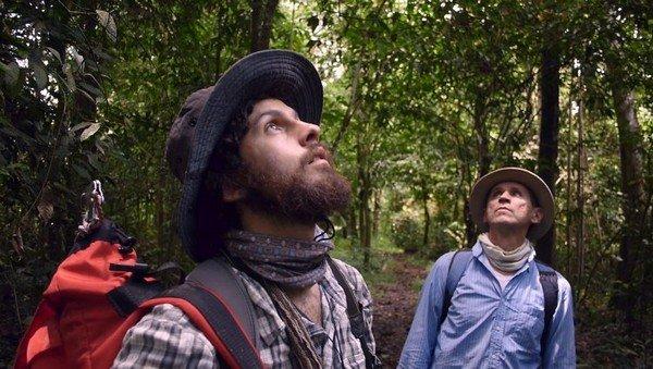 Homme dans la forêt relavant la tête vers les feuillages