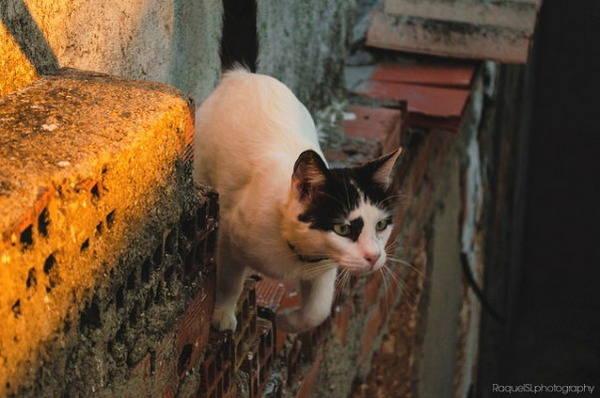 photographie chat bondissant