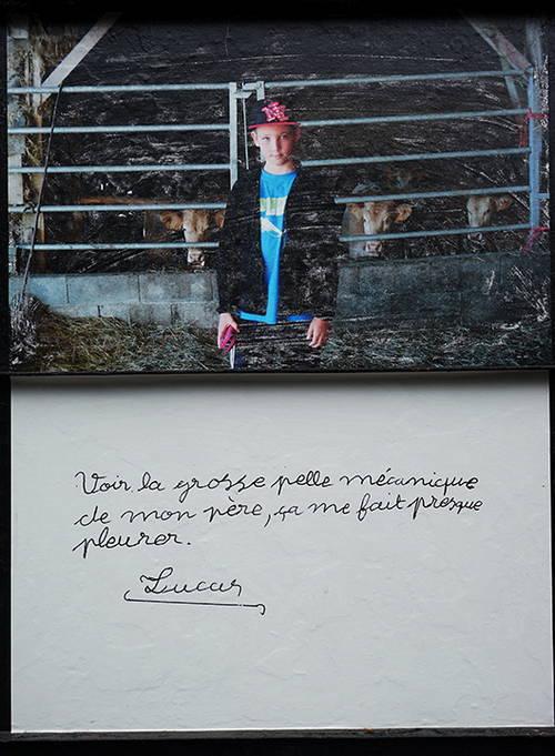 un enfant devant des vaches