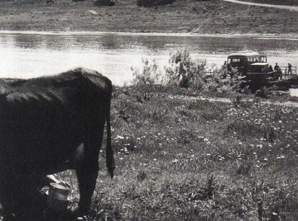 Au premier plan, une vacher et au second, un ferry.