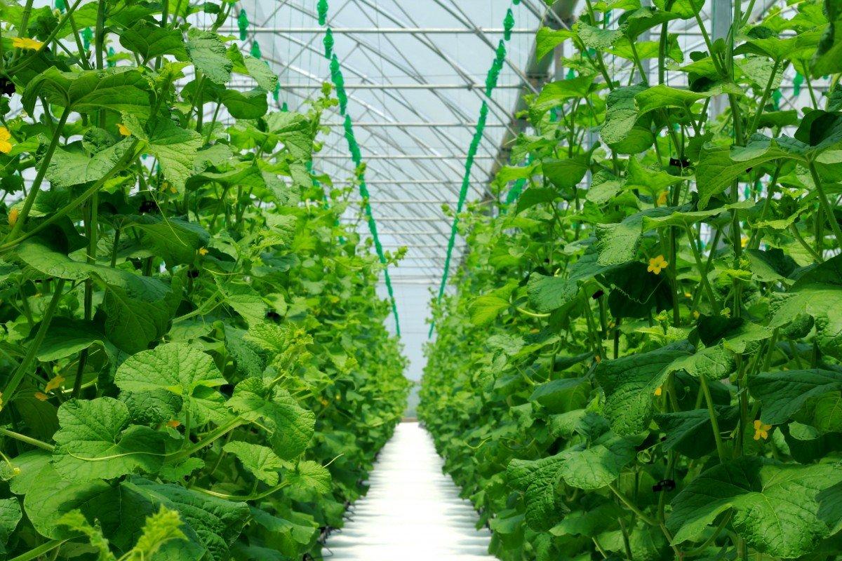 végétaux dans une serre