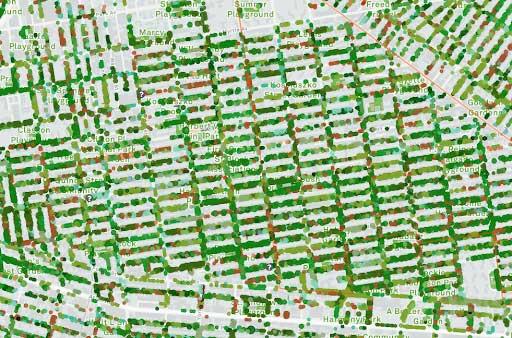 Plan qui montre les rues bordées d'arbres